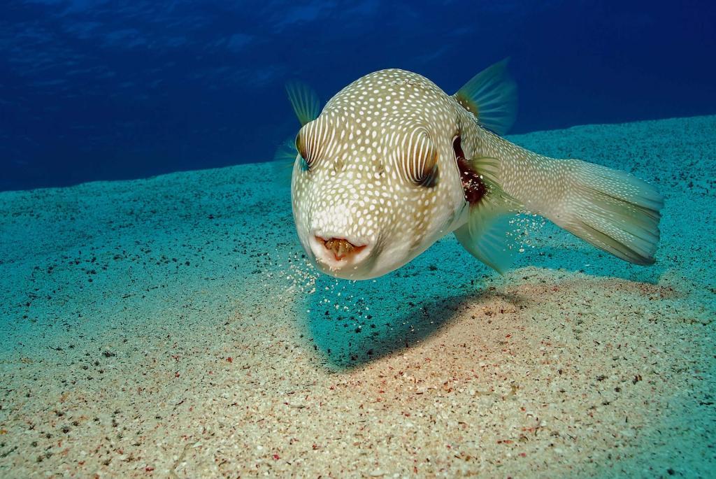 Dahab Underwater